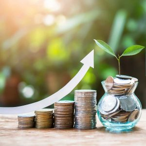 Plant money coins saving growth up increase to profit interest for concept investment mutual fund finance and pension retirement