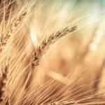 2020 Grain Marketing Outlook