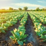 LIFO Inventory Opportunity for Agribusinesses